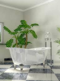 badezimmerpflanzen hauenstein ag