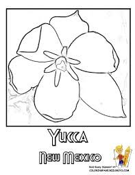 Mexican Flower Colouring Pages Page 2