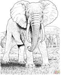 Wonderful Coloring Pages For Adults Safari Animals