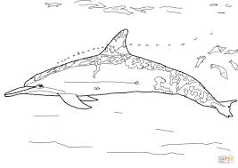 Download Coloring Pages Dolphin Spinner Page Free Printable To