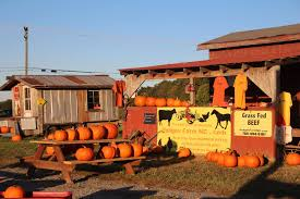 Pumpkin Patch Rides by Volunteer Opportunities Hodges Farm