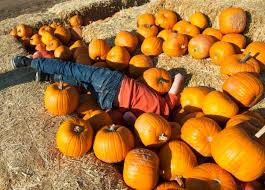 Tanaka Farms Pumpkin Patch by Here Are The Best Photos At Orange County Pumpkin Patches In 2016