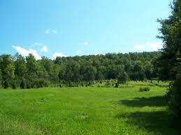 94 Acre Christmas Tree Farm Organic Greene Chenango County New York