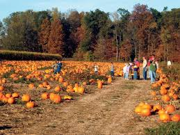 Best Pumpkin Patch Indianapolis by Field Trips To Kelsay Farms Teach Kids Importance Of Milk My