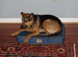Filson Dog Bed by Moving Stuff Around Gift Ideas For The Dog Lovers In Your Life