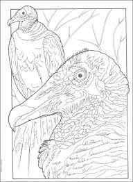 Exotic Birds Creative Haven Coloring Book