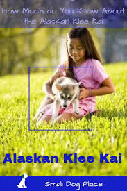 Non Shedding Dogs Family Friendly by 16 Best Kid Friendly Dog Breeds Images On Pinterest Small Dogs