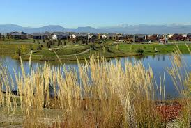 Jefferson County Co Christmas Tree Permits by City And County Of Broomfield Official Website Official Website