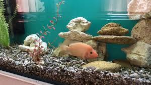 Spongebob Aquarium Decor Set by Fish Tank Decoration At Home Idea Youtube