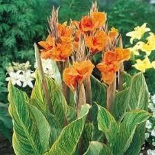 best 25 flower bulbs for sale ideas on floral