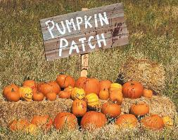 Tucson Pumpkin Patch by Mill Pumpkin Patch Anderson Terrace Event Venue Austin From 7