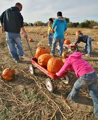 Pumpkin Patch Columbus 2015 by Weekend Activities Curtis Orchard U0026 Pumpkin Patch Champaign Il