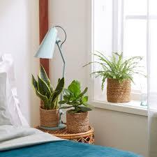 3x schlafzimmerpflanzen mischung inkl körbe