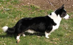 Low Shedding Big Dogs by Saved By Dogs Less Commonplace Ii Kennel Club U0027s Vulnerable