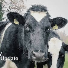 Dairy Update Stomach Tubing The Vital Tool That Can Save Lives