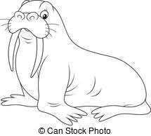 Walrus Clipart and Stock Illustrations 1 071 Walrus vector EPS