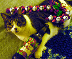 Jolly Pumpkin Artisan Ales Noel De Calabaza by 12 Days Of Christmas Pairing Recap Beer Parrot