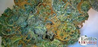 Northern Lights Marijuana Strain Reviews