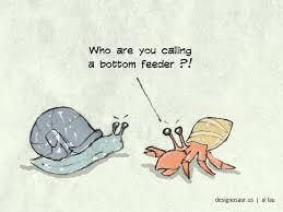 Halloween Hermit Crab Lifespan by Crab Blog Designosaur Us