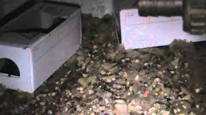 dératisation allomouss problème de souris dans une maison en
