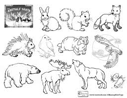 Coloring Pages Of Animals That Hibernate Free Forest In