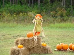 Pumpkin Patch San Jose 2015 by Things To Do In Northeast Florida Northeast Florida Life