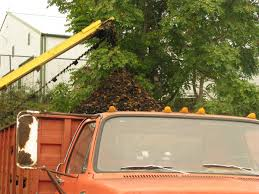 Black Walnuts Seen By Some As Free Money Laying On The Ground | KSMU ... Peterbilt 359 For Sale Covington Tennessee Price 25000 Year Freightliner Coronado122sd Tractor Units 27419 Meet Don Baskin Chevrolet Fanatic Youtube Daniel Pharris Doubles Down At Oscr V Hunt White Keep Raygoza Leader Oct 14 2010 By The Issuu Ripoff Report Truck Sales Llc Complaint Review Truck Sales Llc Ford F800 5000 1989 Lsx Challenge Bradenton 2012 Same Day Coverage Magazine 2006 Freightliner Century 120 For Sale In Www
