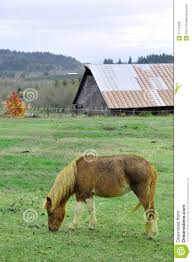 Wet Pony Eating Grass In Front Of Barn Stock Image - Image: 11715299 Raise This Barn With Lyrics My Little Pony Friendship Is Magic Image Applejack Barn 2 S2e18png Dkusa Spthorse Fundraiser For Diana Rose By Heidi Flint Ridge Farm Tornado Playmobil Country Stable And Rabbit Playset Build Pinkie Pie Helping Raise The S3e3png Search Barns Ponies On Pinterest Bar Food June Farms Wood Design Gilbert Kiwi Woodkraft Cmc Babs Heading Into S3e4png Name For A Stkin Cute Paint Horse Forum Show World Preparing Finals 2015