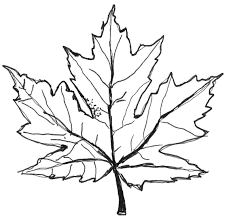 Simple Printable Leaves To Color Quick Free Leaf Coloring Pages For Kids