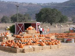 Pumpkin Patch With Petting Zoo Inland Empire by Sd Pumpkin Patches Socal To Do Pinterest Pumpkin Patches