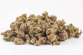 Buy Budget Girl Scout Cookies Online Canada | West Coast Supply Girl Scouts On Twitter Enjoy 15 Off Your Purchase At The Freebies For Cub Scouts Xlink Bt Coupon Code Pennzoil Bothell Scout Camp Official Online Store Promo Code Rldm October 2018 Mr Tire Coupons Of Greater Chicago And Northwest Indiana Uniform Scout Cookies Thc Vape Pen Kit Or Refill Cartridge Hybrid Nils Stucki Makingfriendscom Patches Dgeinabag Kits Kids
