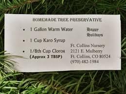Fraser Christmas Tree Care by O Christmas Tree O Christmas Tree U2026 U201d U2022 Fort Collins Nursery