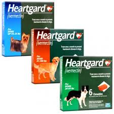heartgard for cats heartgard regular pet meds from worldpetexpress net