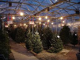 Plantable Christmas Trees Columbus Ohio by Christmas Is Great At Lodi Farms Nursery