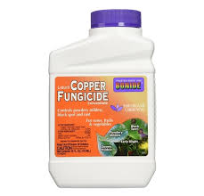 Antifungal Spray For Carpet by A Review Of The Best Fungicides For Powdery Mildew And Snow Mold