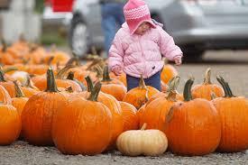 Lane Farms Pumpkin Patch pumpkin patches full of fall fun in eastern iowa hoopla