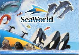 Seaworld Gold Coast Discount Coupon : Adventure Island ... Best Pizza Coupons June 2019 Amazon Discount Code July Tips For Visiting Seaworld San Diego For Family Trips While Going To The Orlando Have Avis Promo Upgrade Azopt Card Mushybooks Payback Coupon Book App Online Codes Bath And Body Works Belk Seaworld Gold Coast Adventure Island Deals Can I Reuse K Cups Pelotoncycles Promo Codes 122