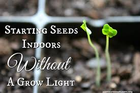 starting seeds indoors without a grow light