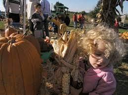 Maryland Pumpkin Patch by Wrotniak Net Pictures Of The Week 1
