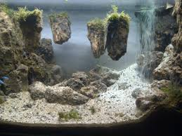 Aquascape Waterfall Its Called Strenght Of A Thousand Stone. - YouTube Photo Planted Axolotl Aquascape Tank Caudataorg New To Hobby Friend Wanted Make An For As Cheap Basic Forms Aqua Rebell Huge Tutorial Step By Spontaneity James Findley Aquascaping Videos The Green Machine Aquarium Beautify Your Home With Unique Designs Aquascape Waterfall Its Called Strenght Of A Thousand Stone Youtube September 2010 The Month Sky Cliff Aquascaping 149 Best Images On Pinterest Ideas Advice Please 3ft Forum