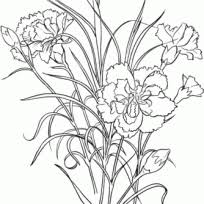 FlowersBeautiful Carnation Coloring Pages For Your Garden Dianthus Caryophyllus Clove With Pink Flower