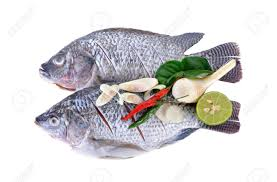 Gutted Scaled And Sliced Nile Tilapia Fish With Herbs On White Background Stock Photo