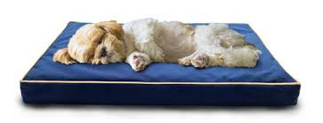 pet beds page 1 furhaven pet products