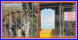 Louisiana House | Free Tony The Tiger