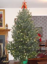 Griswold Christmas Tree by National Lampoon U0027s Christmas Vacation How The Hell Did I End Up