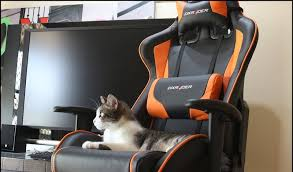 you can finally get your hands on a dxracer gaming chair in south