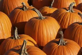 Pumpkin Patch Fort Collins by Greeley Area Pumpkin Patches Moms Greeleytribune Com