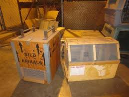 2 Wild Animal Shipping Crates And 5 Dog Kennels