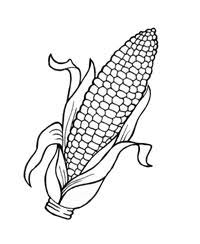 Corn Cob Coloring Page 10 Beautiful Idea Pages 9