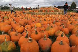 North Lawrence Pumpkin Patch by Best Pumpkin Patches In Upstate Ny 21 Picking Destinations For
